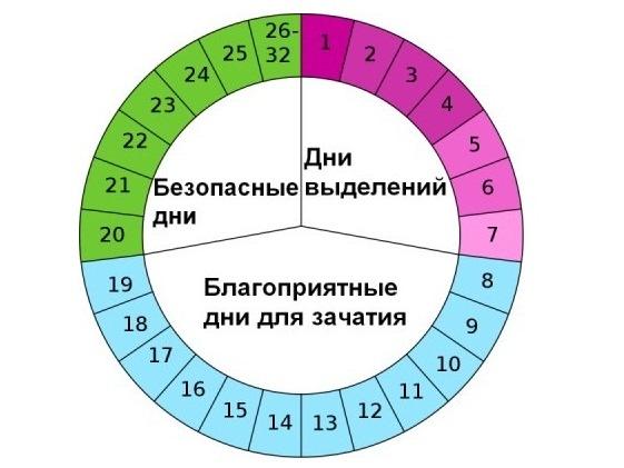 Безопасные дни цикла