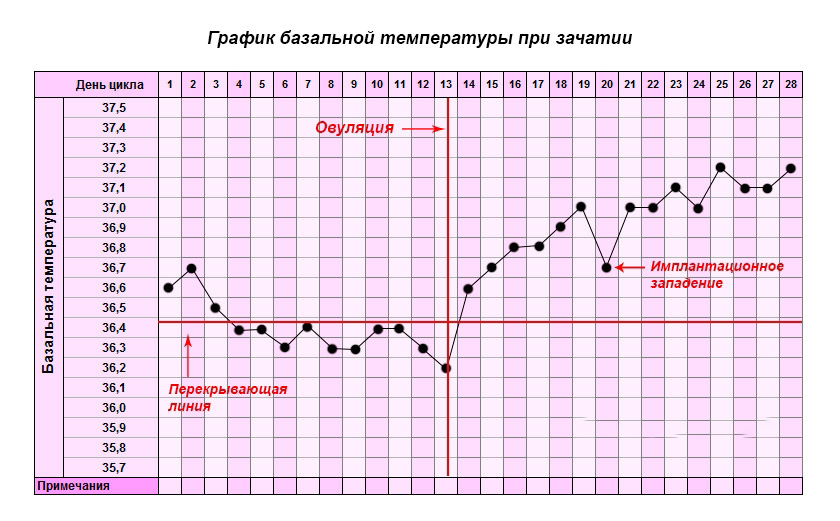 График базальной температуры при зачатии