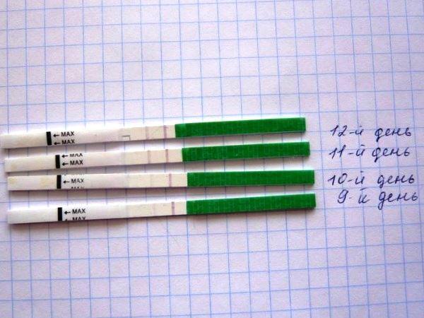 Тест-полоска на овуляцию