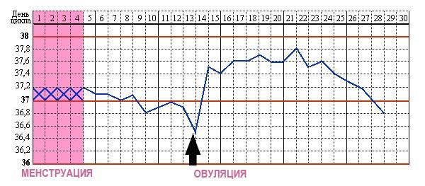 Овуляция на графике базальной температуры