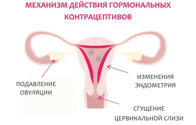 Действие гормональных контрацептивов