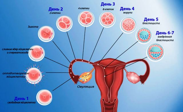 После прекращения приема противозачаточных нет месячных