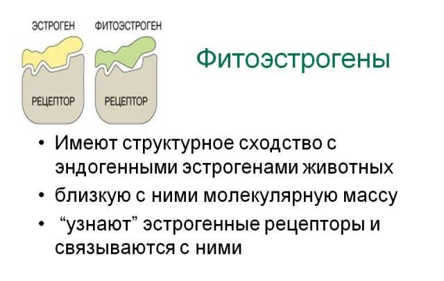 Фитоэстрогены при климаксе