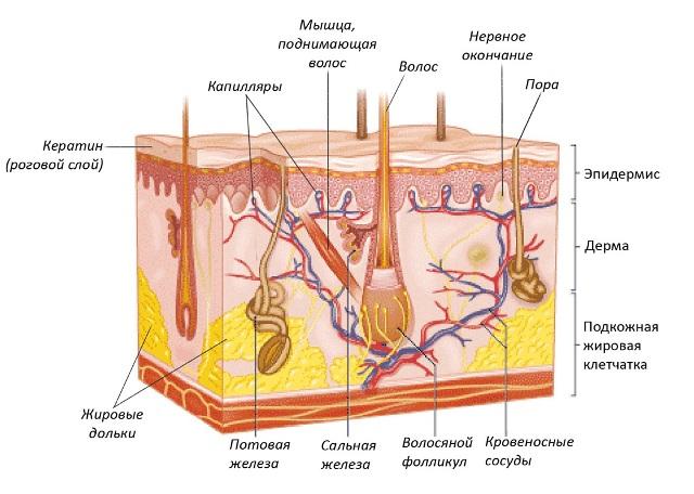 Изменения кожи при климаксе