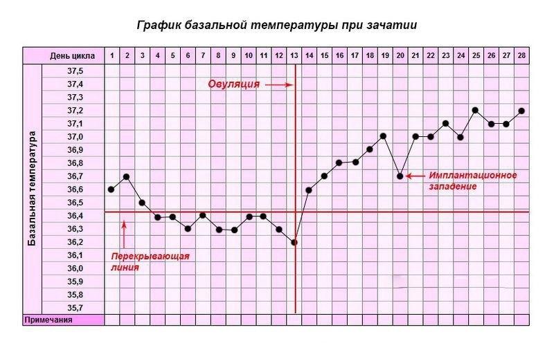 Базальная температура при зачатии